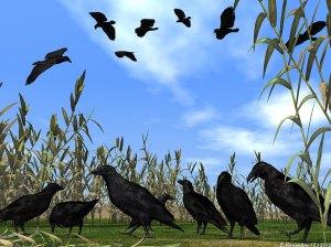 crowsnravens1