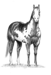 horse-bw