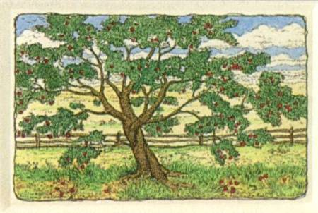 """The Apple Tree"" by Susan Hunt-Wulkowicz"