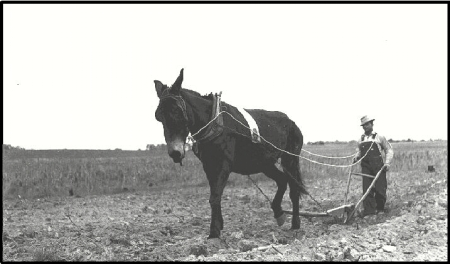 Image from www.yale.edu/fes519b/pitchpine /sitehistory.html