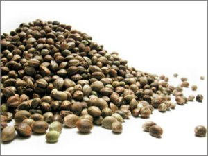 Hemp Seeds (Image from www.divavillage.com)